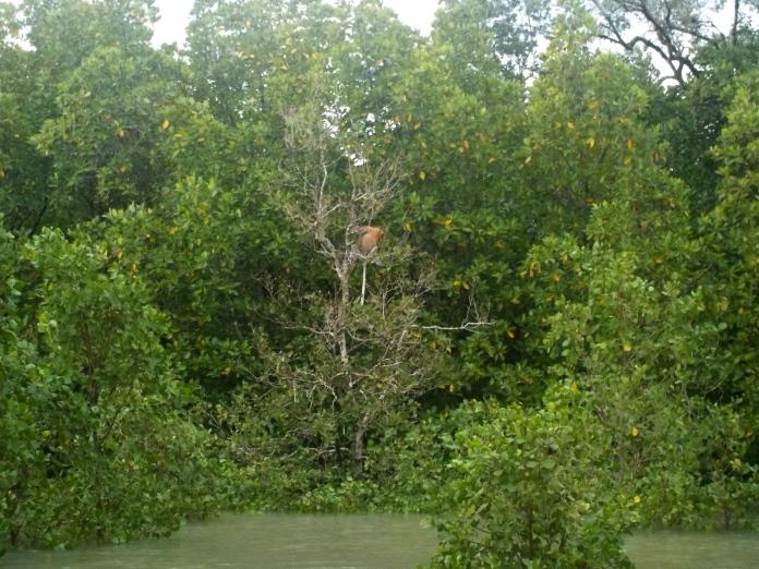 Oft sitzen die Affen in blattlosen Bäumen, damit sie ihre Feinde besser sehen können.