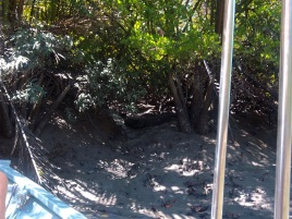 Tom entdeckt ein großes Krokodil unter den Bäumen