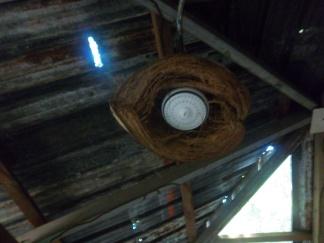 Kokosnüsse werden hier für alles verwandt