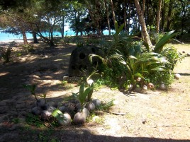 Auf der Schildkröteninsel Satang Satang