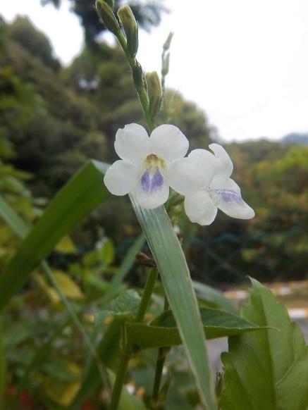 Auch das ist eine kleine Orchidee