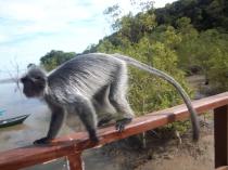 Bloss schnell vorbei an diesen komischen großen Affen