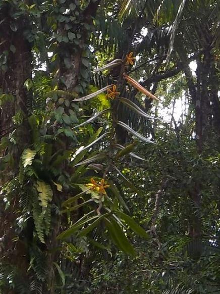 Eine Orchideenart