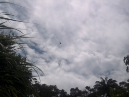Die fliegende Spinne. Hihi.