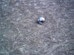 Einer der kleinen Einsiedlerkrebse, die hier herum laufen