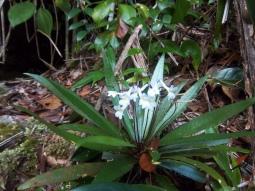Ja, schon wieder kleine Orchideen