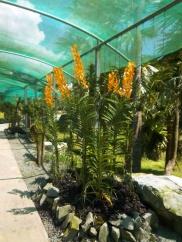 Es gibt auch stehende Orchideen - teilweise sind die größer als ich