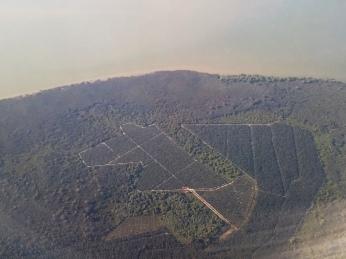 Deutlich sichtbar: Palmöl-Plantagen in den Regenwald geschlagen