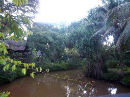 Umgeben von Regenwald: Das Sepilok Nature Resort