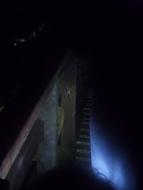 Handtellergroße Spinne bei der Nachtwanderung