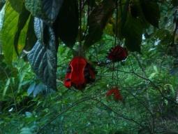 Ungewöhnliche Blüten im Baum vorm Haus. Leider wusste auch Tom nicht wie das Gewächs heißt