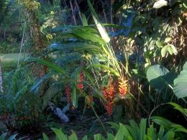 Hummerscheren kenne ich schon aus dem Regenwald von Ecuador