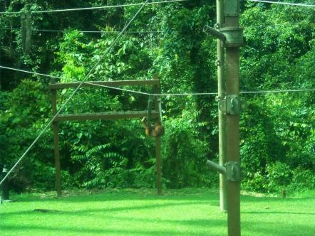 Entspannt in der Affenhängematte