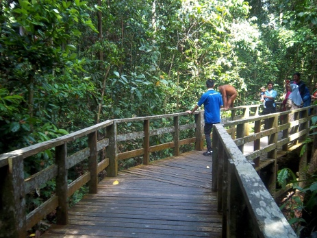 Der Ranger lenkt den jungen Orang Utan von den Touristen ab