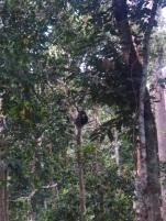 Ein Sonnenbär döst auf einem Baum