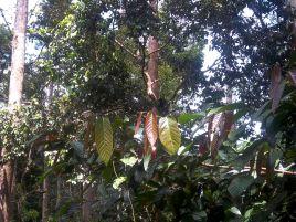 Gut versteckt im Blätterdach