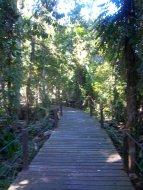Plankenweg durch den Regenwald - damit die Touristen keine matschigen Füße kriegen