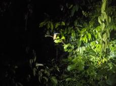 Vom Licht paralysiert: Ein King Fisher oder auch Eisvogel genannt