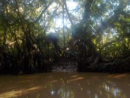 Wieder einmal Mangroven