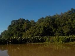 Diese eingeschleppten Pflanzen vermehren sich rasend schnell auf dem Pitas Lake