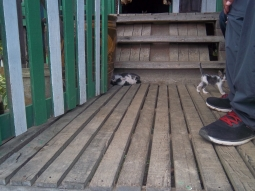 Kleine Katzenbabys streunen auch herum