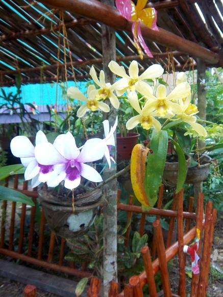 Fast jeder hier hat Orchideen im Garten