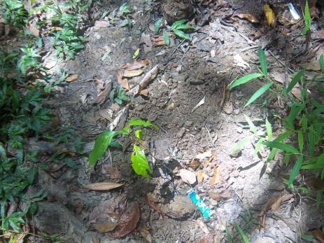 Mein Beitrag zur Regenwaldaufforstung
