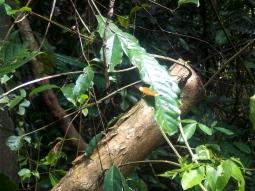 Beim Spaziergang durch den Regenwald erwische ich einen Schmetterling