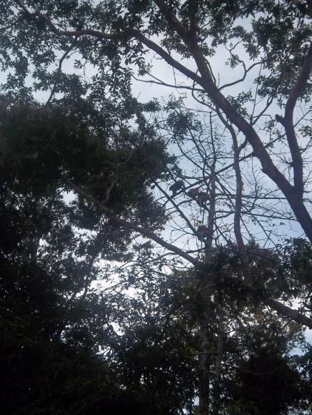 Ein Baum voller Affen