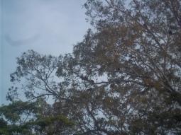 Noch ein bei Affen beliebter Baum