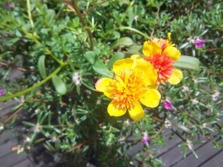 Natürlich auch hier schöne bunte Blumen
