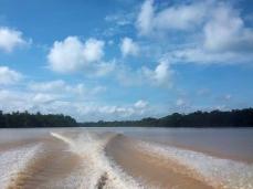 Letzter Blick auf den Kinabatangan und den Regenwald