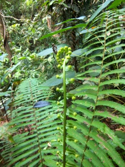 Kleiner Farn im Regenwald