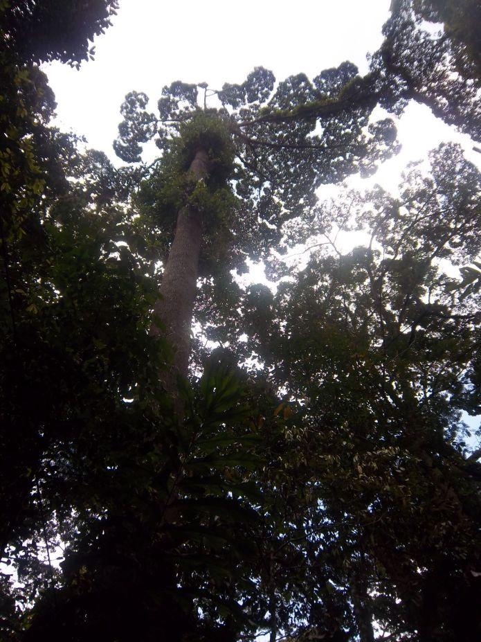 Dichtes Blätterdach