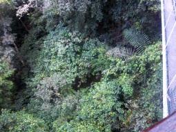 Blick nach unten - der Canopy Walkway soll der höchste Walkway sein