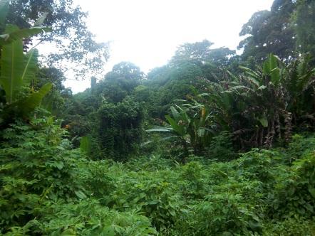 Allein inmitten von Regenwald