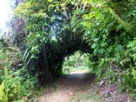 Wie ein Tunnel ins Wunderland Regenwald