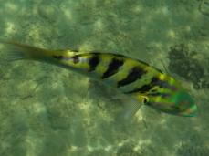 So farbenfrohe Fische gab es einige