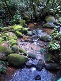 Durch den Kinabalu Park fließt ein kleiner Fluss