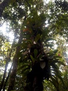 Im Botanischen Garten wachsen viele Orchrideen