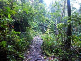 Auf dem Silau-Silau-Trail