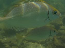 Die Fische kommen wieder ganz dicht dran