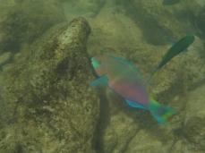 Ich steh einfach auf diese bunten Papageienfische
