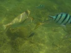 Und immer wieder: so viele Fische!