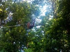 Seduku, eines der Weibchen hier im Nature Reservat