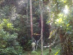 Da kommt Annuar, einer der Orang Utan Männer