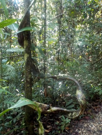 Unterwegs im Semenggoh Nature Reservat