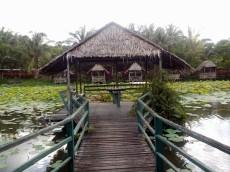 Idylle pur: der Seerosenteich voller Fische