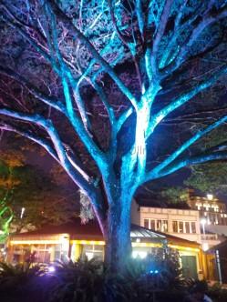 Auch die Bäume an der Waterfront strahlen farbig