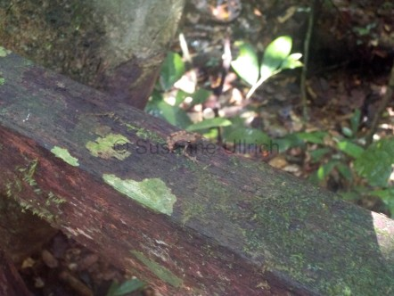 Entdeckung am Rande: ein kleiner Frosch